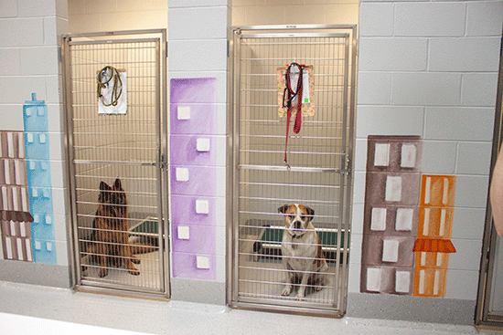Club Canine Rooms